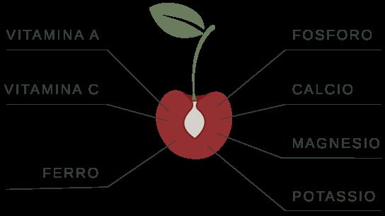 nutrienti ciliegia